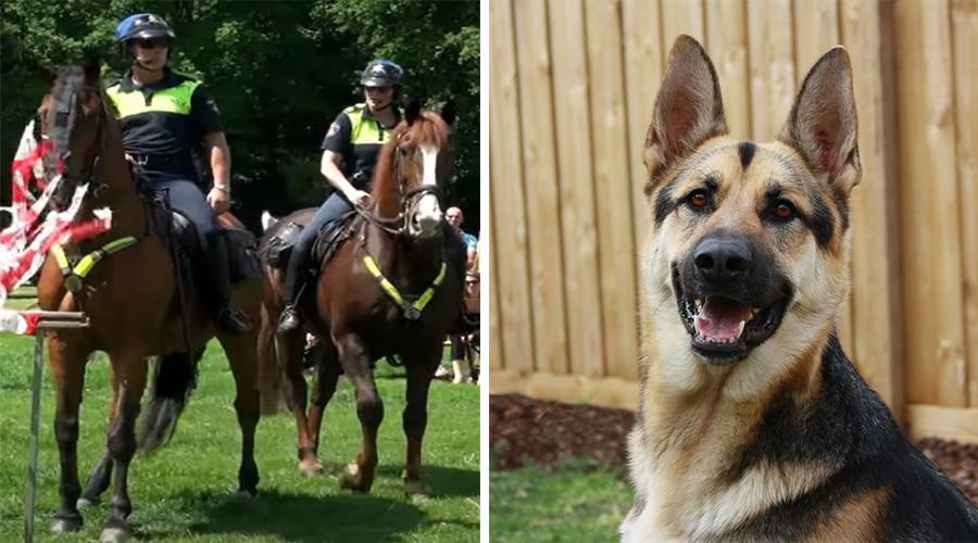 Rotterdam handhaaft politiehond & paard als 'geweldsmiddel'