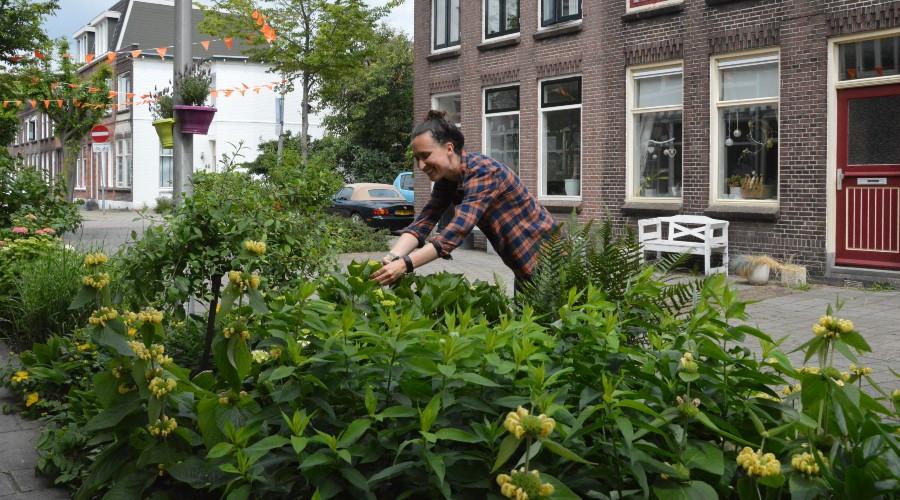 Bewoners van duizend Rotterdamse straten vergroenen omgeving